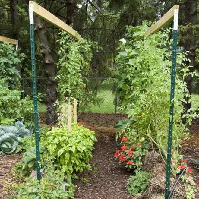 Как вырастить овощи на соломе?   На грядке (Огород.ru)