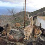 Απαρηγόρητοι οι κάτοικοι του Εμπορειού Νισύρου. Ένας δολοφόνος κυκλοφορεί ανάμεσά τους