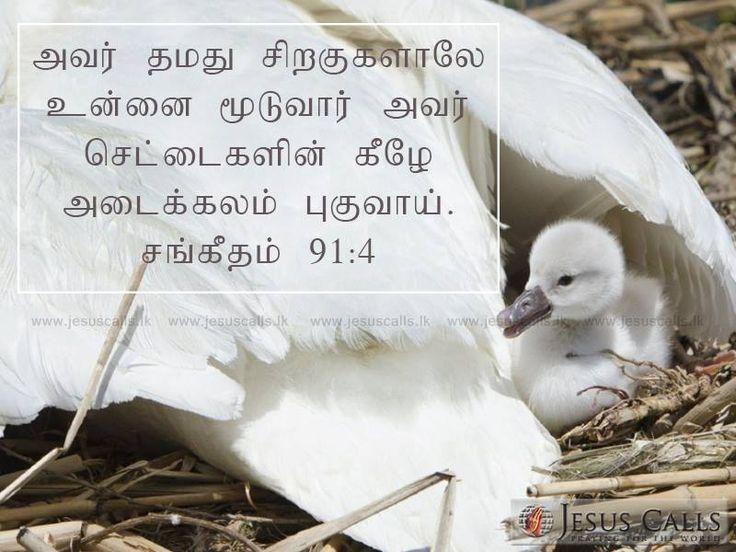 அவர் தமது சிறகுகளாலே உன்னை மூடுவார்; அவர் செட்டைகளின் கீழே அடைக்கலம் புகுவாய். சங்கீதம் 91:4