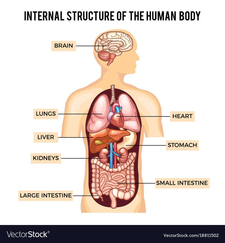 Human Body Organ System Diagram  Human Body Organ System -6373
