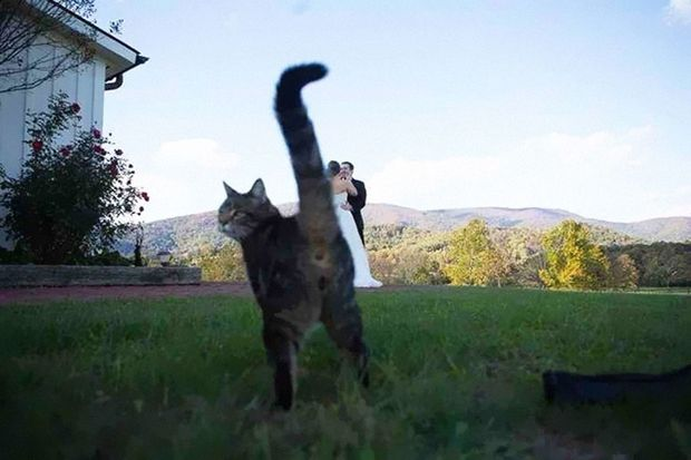 Lustige Tiere während einer Fotobombe