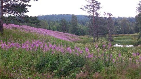 Skog av Geitrams