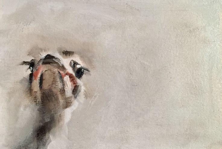 Ostrich by Julie Brunn