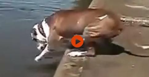 Funny Animal Fail Compliation #Funny#Cute#Cats#Dogs#Adorable#Fail#Animals