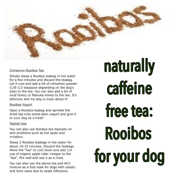 "Ever heard of Rooibos tea? Rooibos, aka ""Red Bush"", is an herbal plant from South Africa. Since it is anti-inflammatory, it can be used to help dogs with skin problems resulting in itching and skin irritation. Dogs with allergies such as atopic dermatitis can benefit as well. It is anti-inflammatory and has been associated with boosting the immune system."
