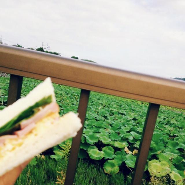 10/1 朝ごはん おくらの花のサンドイッチ(たまごサラダ、おくらの花、ハム、レタス)  辛子マヨネーズと黒胡椒たっぷりサンドイッチ。 - 71件のもぐもぐ - 公園で朝ごはん by 梅ざらめ