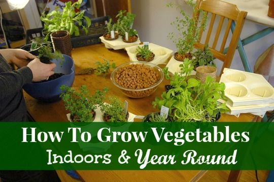 1000 images about diy grow vegetables indoor on pinterest gardens vegetables and vegetable - Growing vegetables indoors practical tips ...