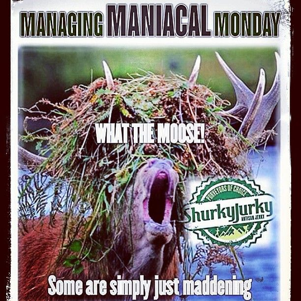 #ManagingMANIACALMonday takes real skill because some are simply just maddening! And you know this, maaan! We suggest eating some chocolate and jerky to keep the beast from going ballistic. Be safe, bro. Bite, nibble, bite. Only available at www.crowdsupply.com #shurkyjurky #paleo #foodporn #believe #crossfit #WOD #weightlifting #bodybuilding #portland #seattle #oregon #colorado #nyc #brooklyn #freshfood #eatfresh #eatclean #cleaneating #healthyeating #craftbeer #craftbrew #s