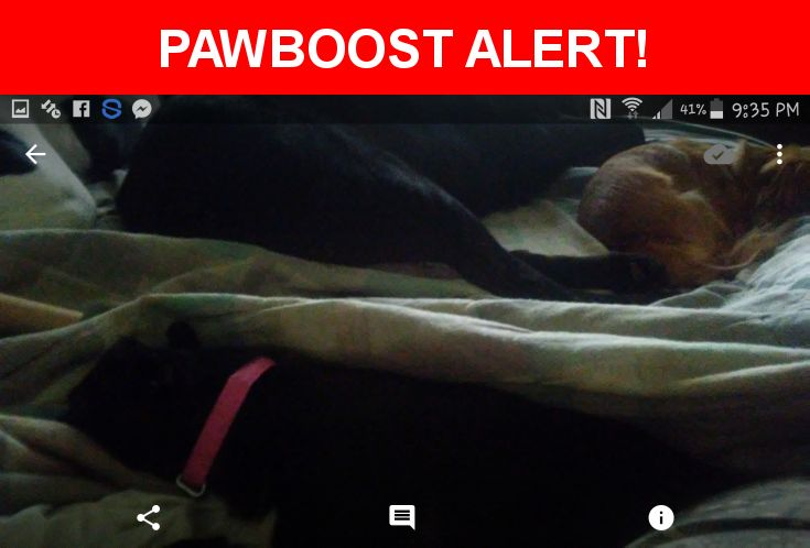 Please spread the word! Baby Girl was last seen in Portage, IN 46368.  Message from Owner: ●●LOST FEMALE CHIHUAHUA●● Her name is Baby Girl. She is all black with a little bit of white on her chest. She is wearing a pink collar with no name tag. She is very friendly. She was last seen wandering around on the 1300th block in Camelot MANOR in Portage,IN. She lives at 1261 Camelot Manor. She's been missing since 6:30pm this evening. We've been searching for her for hours with no luck.  She is…