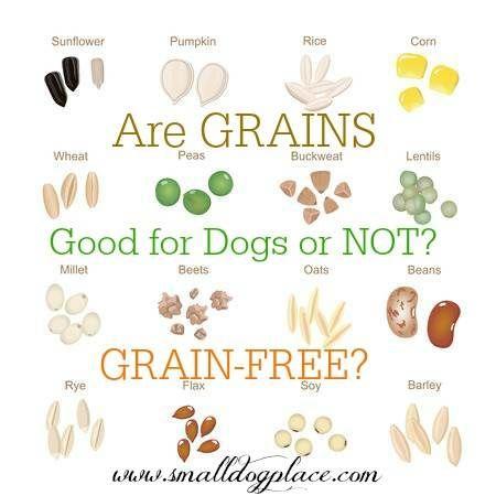 Grain Free Dog Food