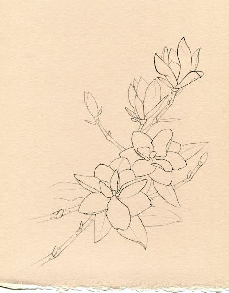 This is my flower, these trees only bloom in May usually around my birthday its a perfect sketch magnolia - tattoo.