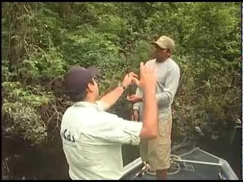 Programa Pesca Alternativa - PGM 434 - Tucunarés na Amazônia