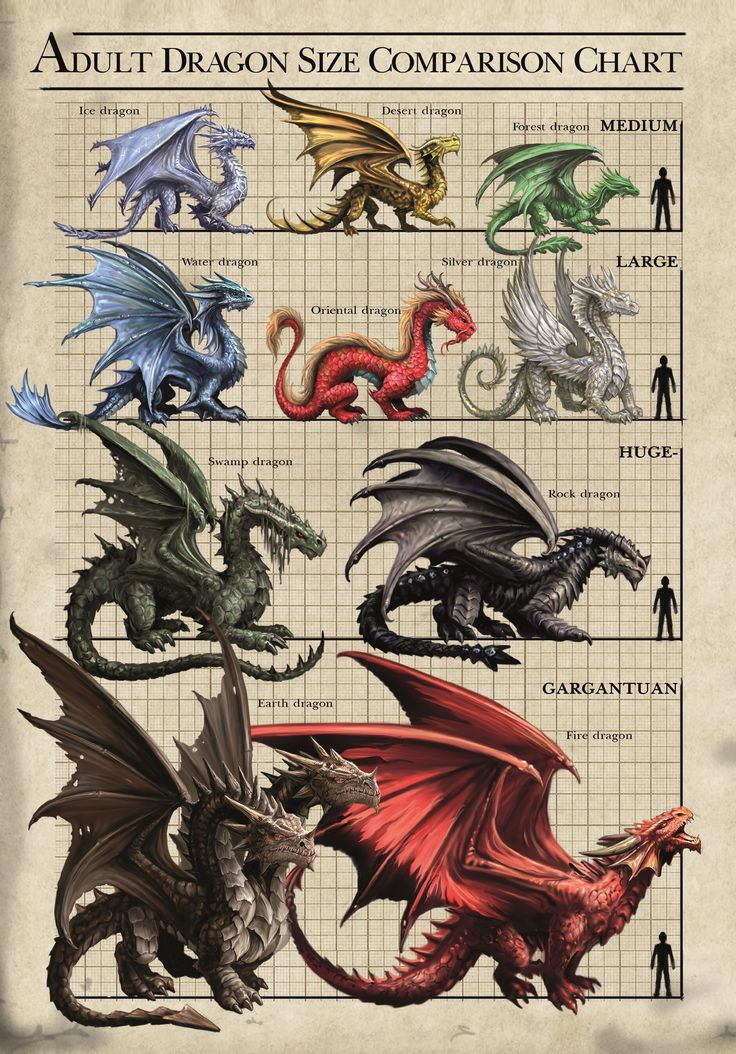 """Dragon Size Chart Card (13 x 18cm) by Anne Stokes from """"Age of Dragons Cards"""" (AN78)"""