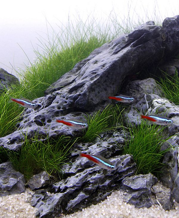 17 Best Images About Aquascaping Project On Pinterest