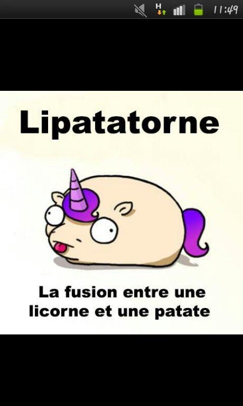 Patate + Licorne = Lipatatorne