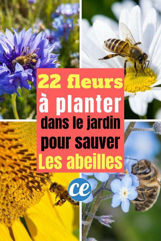 Vous Voulez Faire Plaisir Aux Abeilles Plantez Ces 22 Fleurs