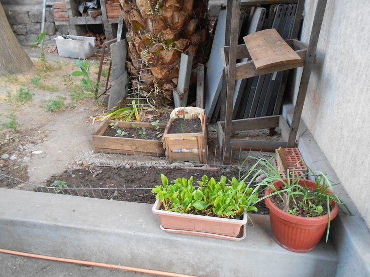 mas plantits