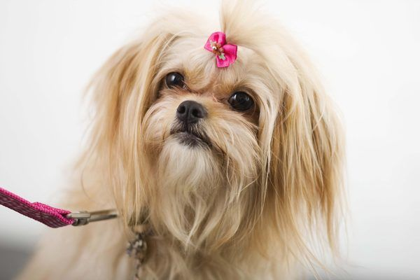 How to Make Rubber Band Hair Bows for Dogs | Dog Care - The Daily ...