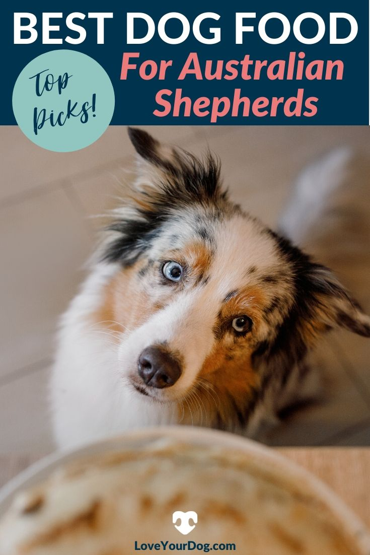 Best Dog Foods For Australian Shepherds Puppies Adults Seniors In 2020 Dog Food Recipes Best Dog Food Best Puppy Food