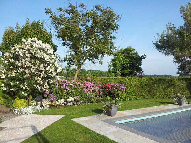 Het gras maakt van de tuin één geheel. De Sering en Rhodo´s vallen in deze periode naturulijk extra op.