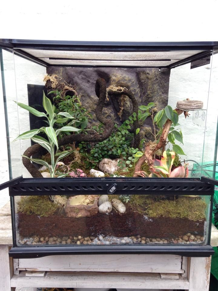 Crested Gecko planted tank