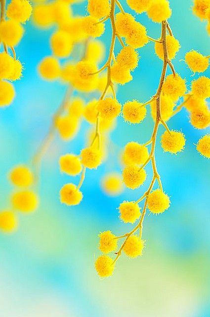 turquoise background and yellow flowers