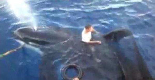 Mengejutkan, Paus Pembunuh Tiba-tiba Muncul di Teluk Tomini