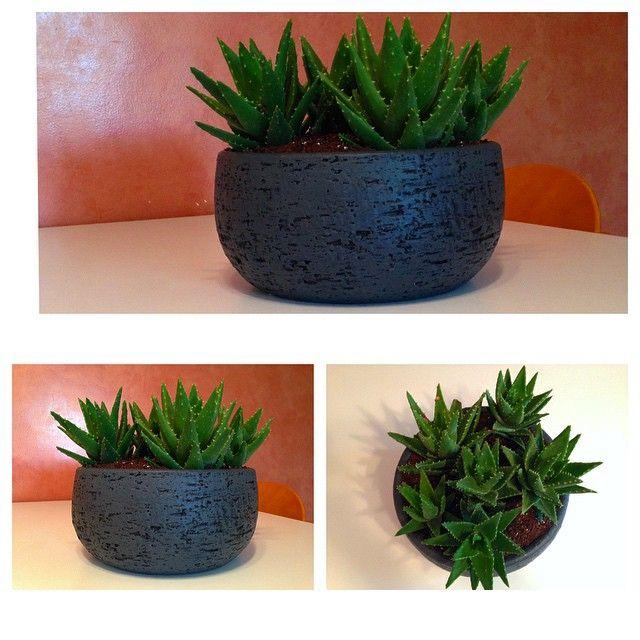 #Maticas #mymaticas #homedecore #cactus #succulents