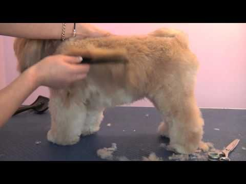 Grooming Guide - Lhasa Apso Pet or Salon Trim - Pro Groomer - YouTube