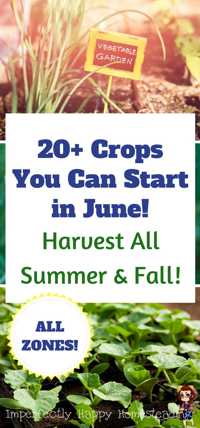 20+ Crops You Can Start in June for Summer & Fall Harvests! It is NOT to late to start your vegetable garden.