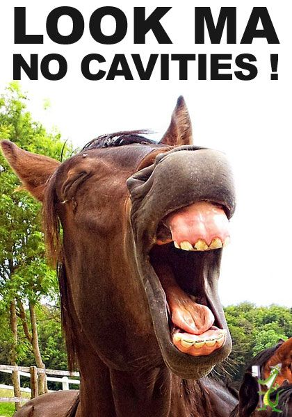 Cute horse with no cavities.