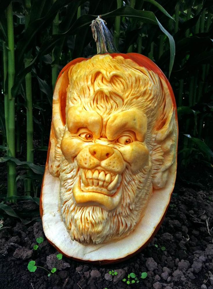 Villafane advises would-be carvers to steer clear of perfectly round pumpkins. His favorite carving pumpkins have an oblong shape.