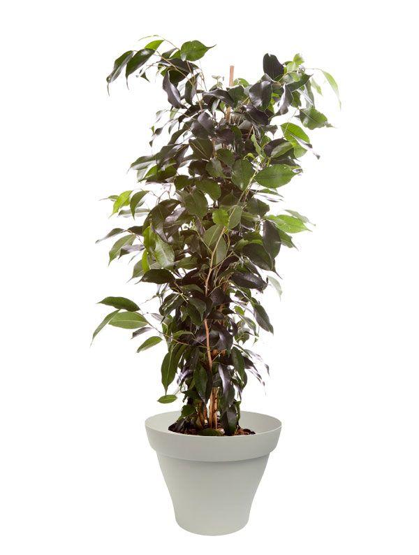 89 best Plantes d\'intérieur avec pots blancs images on Pinterest ...