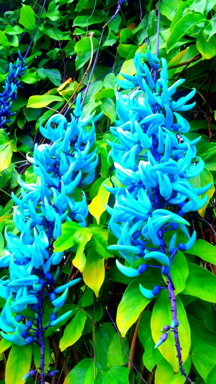Nagasaki, Botanical gardens and Jade on Pinterest