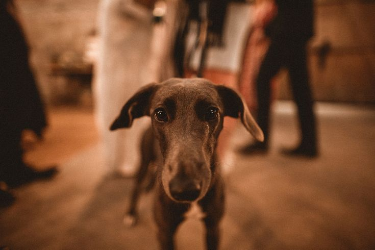 The couple's dog attended their Laid Back Barn Wedding reception. Photography by Benjamin Wheeler