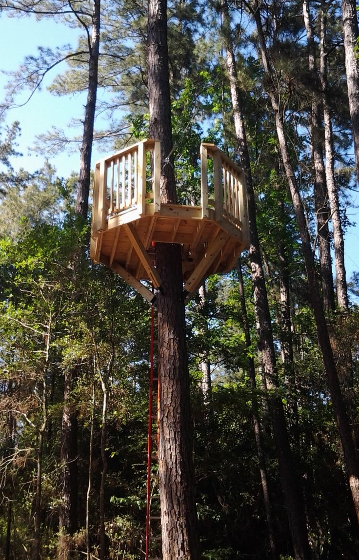 A Octagon Tree Platform With A Zipline Exit Backyard