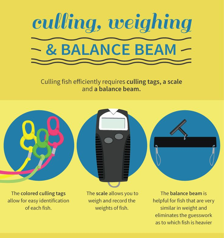 57 best images about fishing advice on pinterest fishing for Tournament fish weighing scales