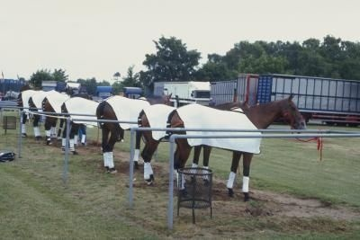 DIY horse blanket! -Includes instructions Deffs wanna try this!