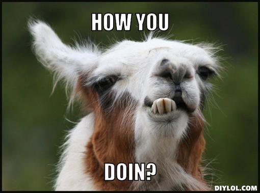 Funny Llama Meme Generator - DIY LOL
