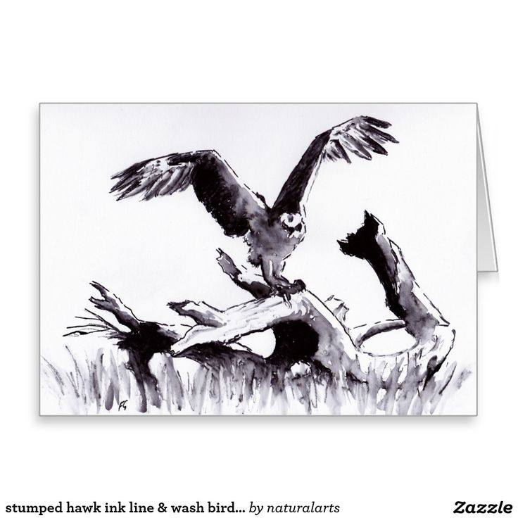 stumped hawk ink line & wash bird drawing greeting card