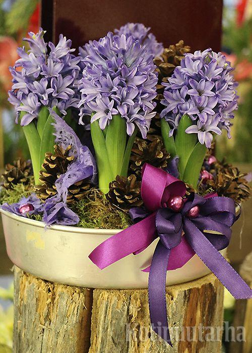 Lilat hyasintit alumiinivadissa. Koristeena luonnonmateriaaleja ja värikkäitä nauhoja.