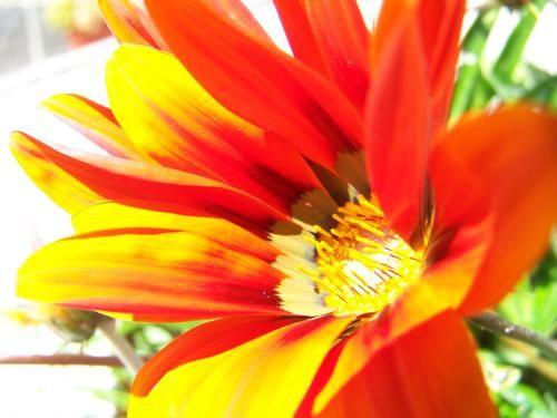 flower @ sun exposure