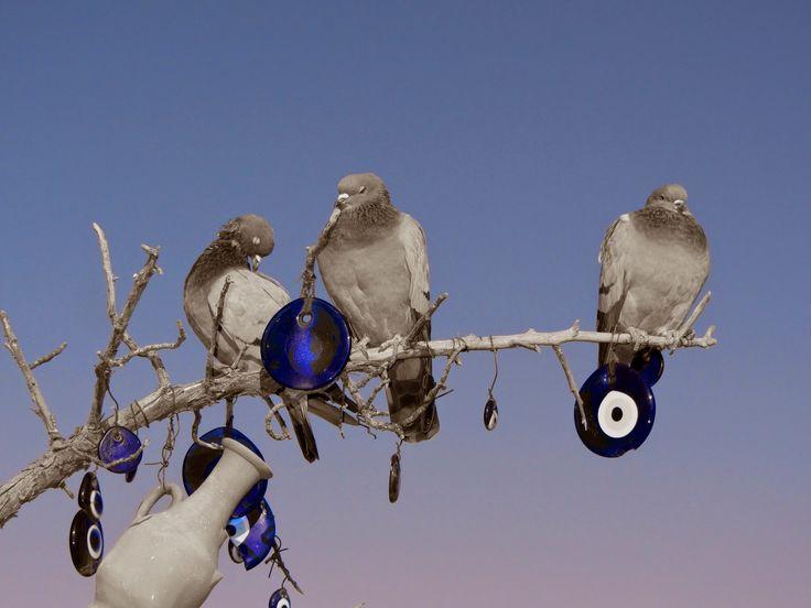 Mi Mundo en Fotografias: Las palomas del ojo turco