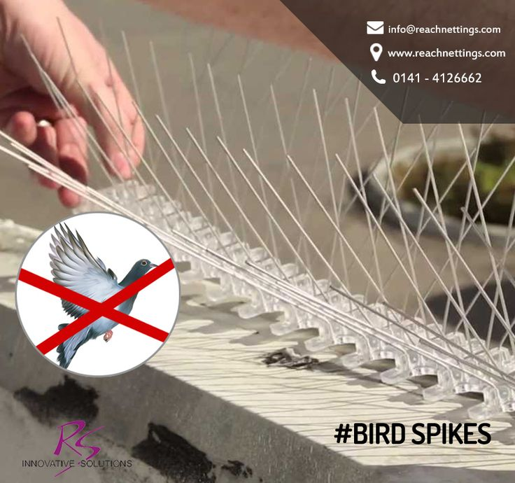 #BirdSpikes are one of the most time-tested and versatile methods of bird control, to prevent feral or wild birds from roosting or perching. #BirdNetJaipur #BirdControl #NettingSolutions