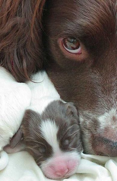 What a beautiful picture showing a mother's proud devotion to her newly born pup