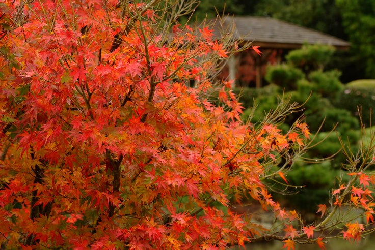 Japanese Garden - Toowoomba.   QLD  Taken by Parkerartzzi