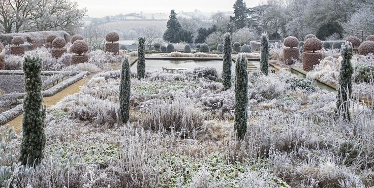 17 Best Images About Winter Garden On Pinterest Gardens The Winter And Taxus Baccata