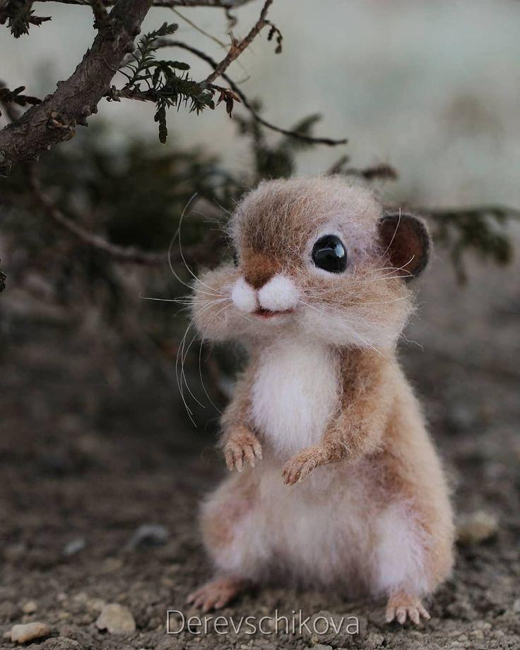 картинки милые очень милые животные статью, точка долголетия