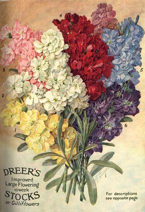 The University of Delaware:  Art of Botanical Illustration. Nursery and Seed Catalogs