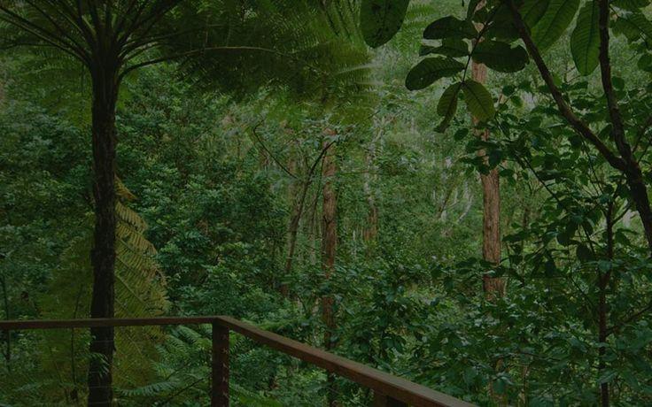 Accomodation in Montville amongst The Treetops :: Tree Houses Of Montville : Relaxing Romantic :: Sunshine Coast Hinterland